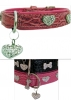 Dog and Star Hundelederhalsband Pink Croc [Details]